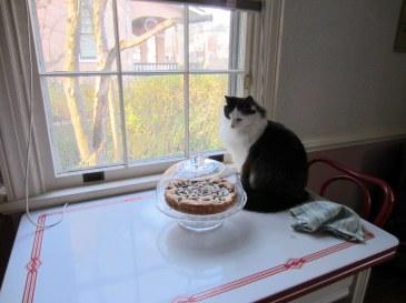 kitty vs. cake